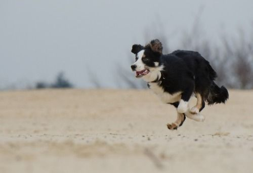 Bordercollie Colliepoint Aggressive Dog Dogs Dog Exercise