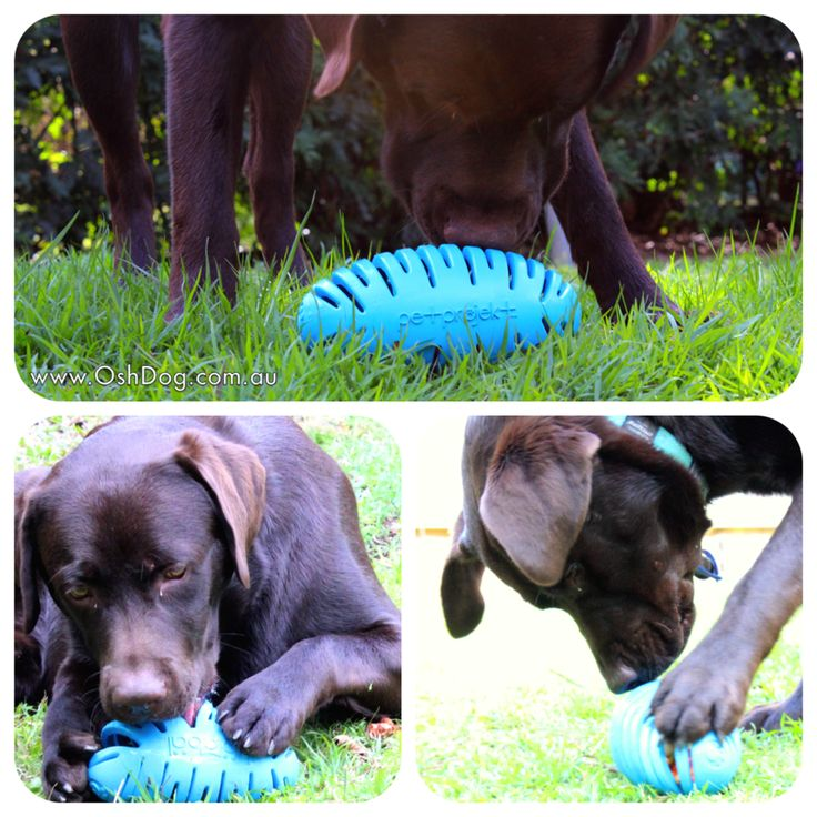 Always supervise your dog when introducing a new toy. Clean after each use and inspect regularly for any signs of wear.