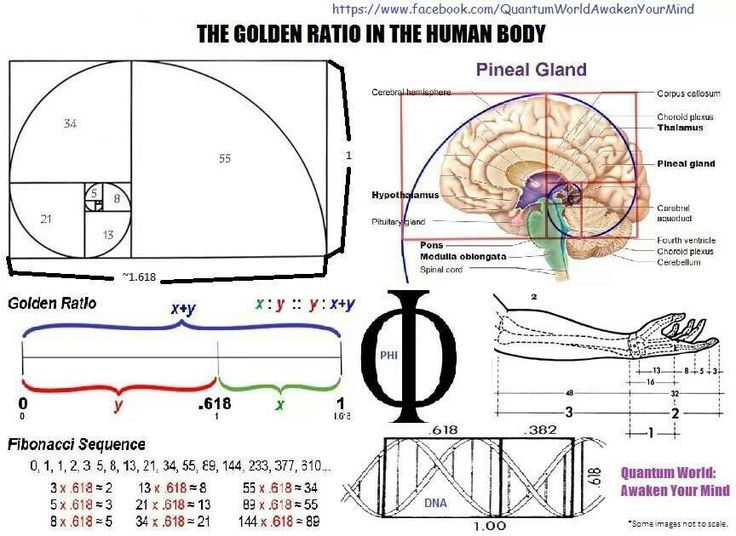 """golden ratio and fibonacci series Abstract the research question of this extended essay is, """"is there a relation between the fibonacci series and the golden ratio if so be the re."""