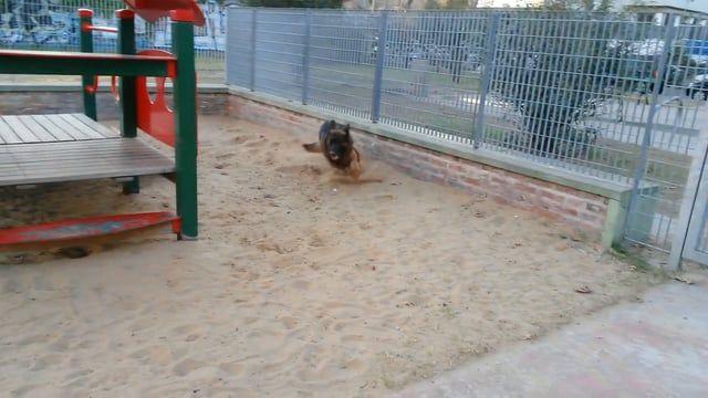 Danko crazy in the sand Cid Campeador