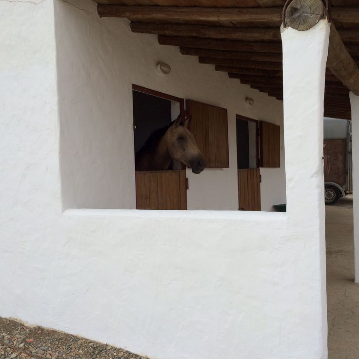 Boxes cavalos