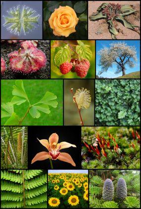 Algunas definiciones básicas para comprender la naturaleza de las plantas.
