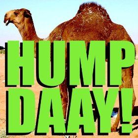 Hump Day Camel From GEICO | Geico Camel Hump Day! Alert Tone