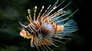 dragonfish - Google Search