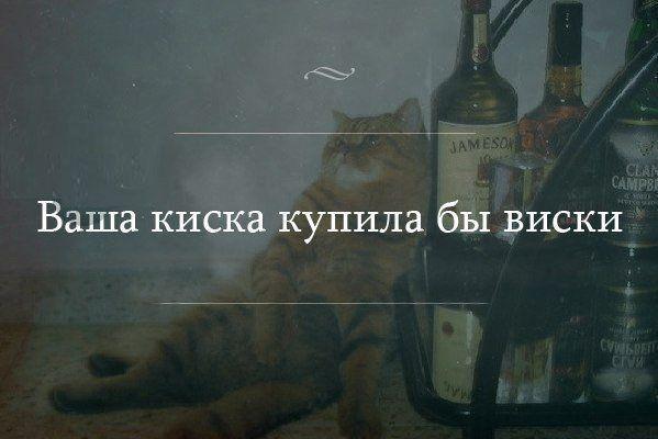 Ваша киска купила бы виски.