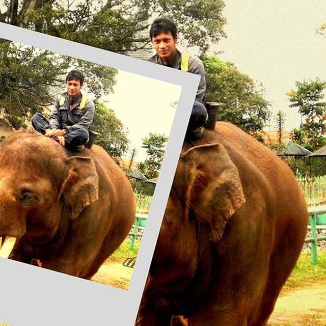 jidan elephant sumatera
