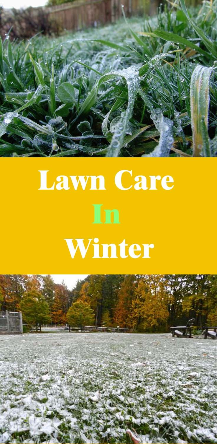 Lawn Care In Winter Gardens Lush And The O Jays