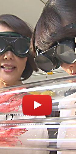 Hilarante recette de crevettes flambées ! Fou rire garanti.  http://rienquedugratuit.ca/videos/hilarante-recette-de-crevettes-flambees/