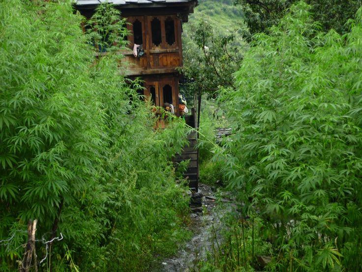 The Malana Trek >>>  #camping #treks #trekking #TheMalanaTrek