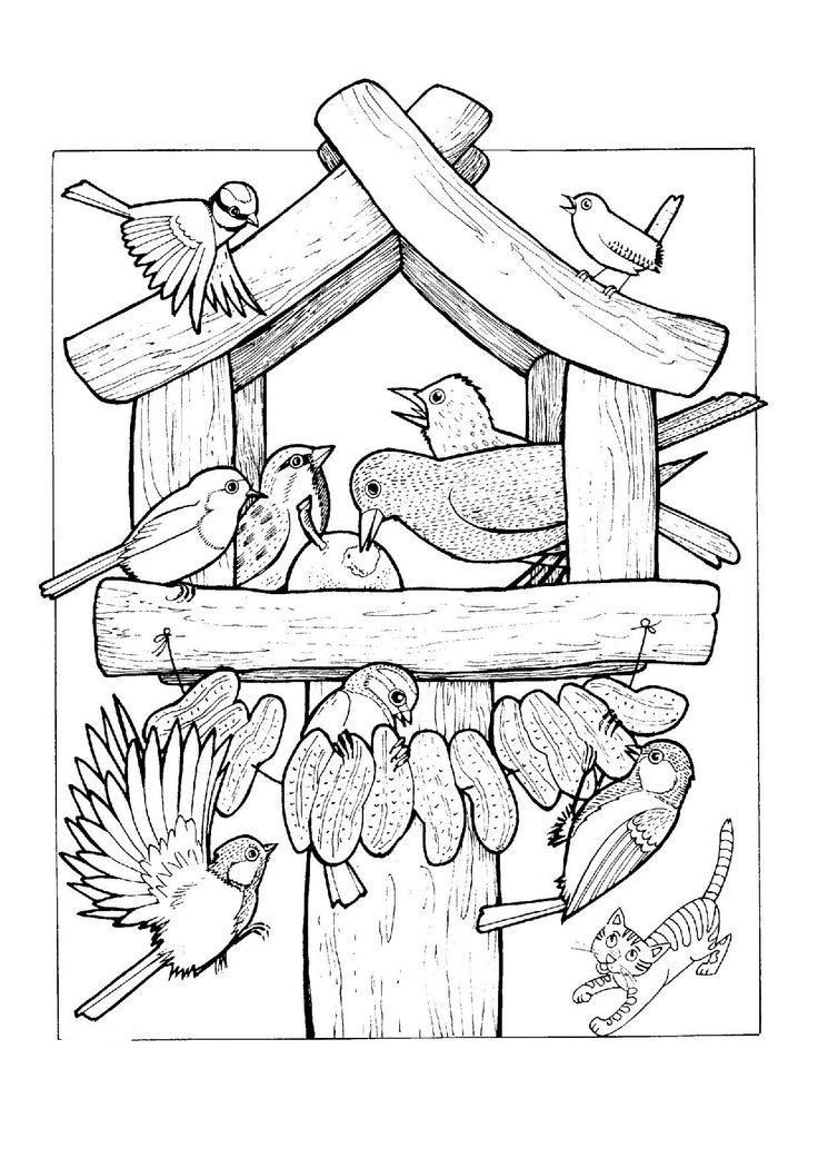 kŕmenie vtáčikov