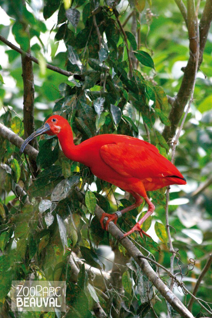 17 meilleures id es propos de animaux color s sur pinterest oiseaux color s oiseaux - Pour effrayer les oiseaux ...