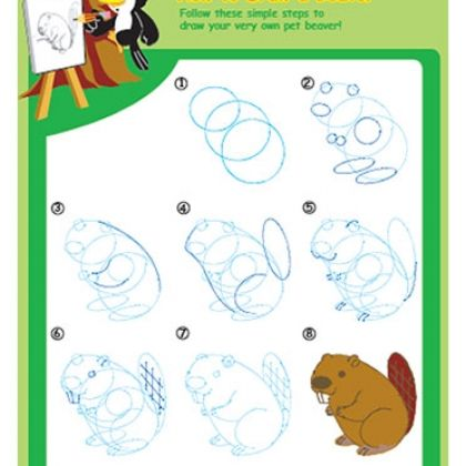 Learn how to draw a beaver