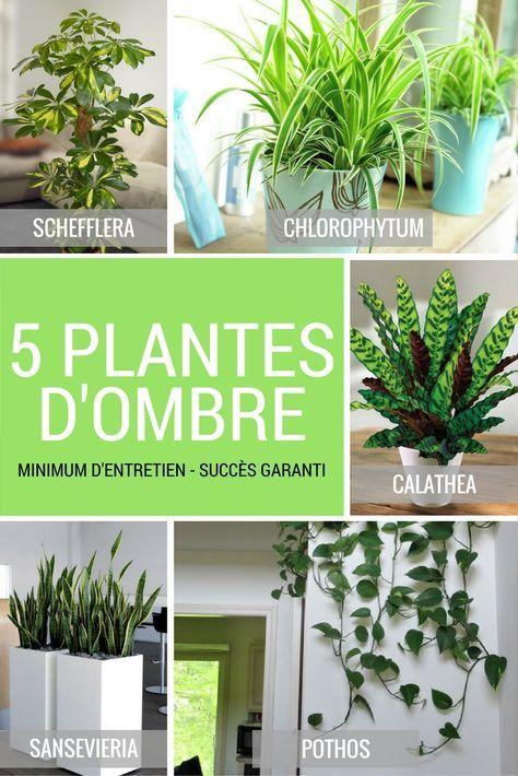 5 plantes vertes d'ombre pour l'intérieur