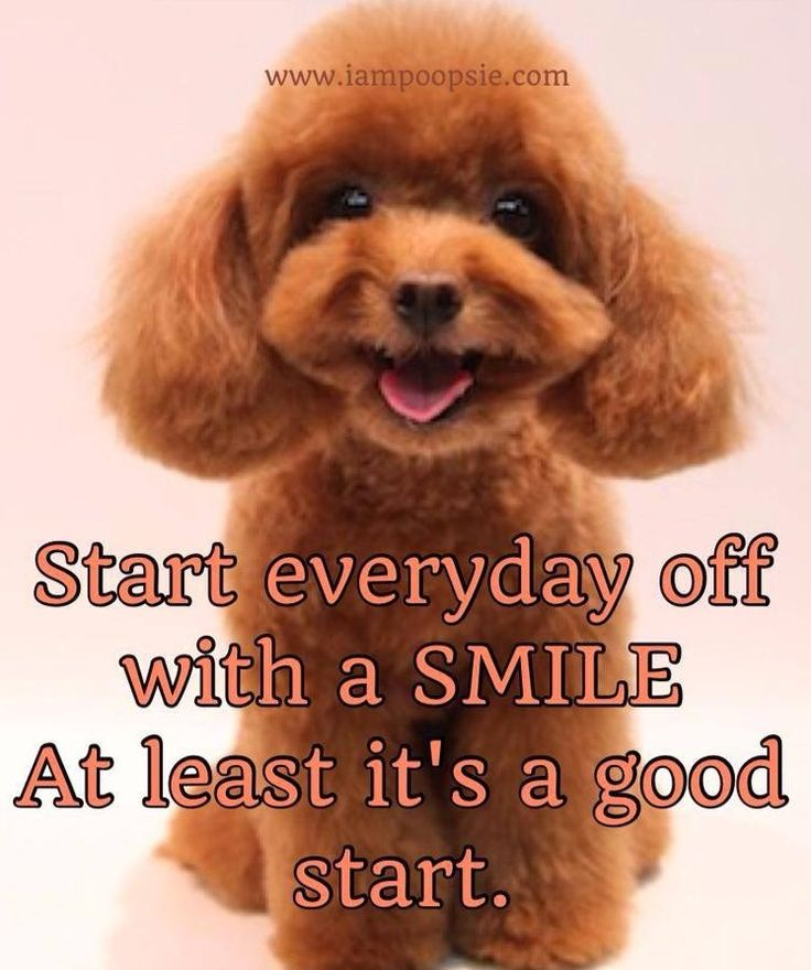 Quote Everyone Should Smile: 21 Best Images About Braces For Everyone! On Pinterest
