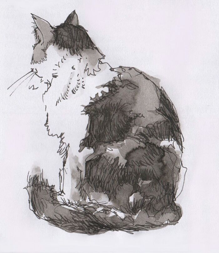 Cat; Rohrer and Klingner Black Document ink in a Lamy Safari fountain pen, with watercolour wash.