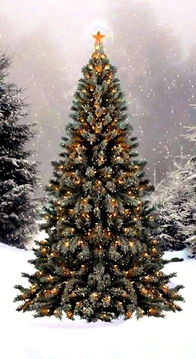 Winter photography Blue spruce Christmas tree with snow fallingToni Kami Joyeux Noël