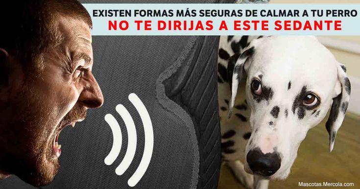 Incluso el gobierno emitió una advertencia de sobredosis de este medicamento que algunos dueños usan para tratar a sus mascotas en ciertas situaciones. http://mascotas.mercola.com/sitios/mascotas/archivo/2017/10/23/fobia-del-ruido-en-perros.aspx?utm_source=mascotas&utm_medium=email&utm_content=art1&utm_campaign=20171023&et_cid=DM163480&et_rid=94130941
