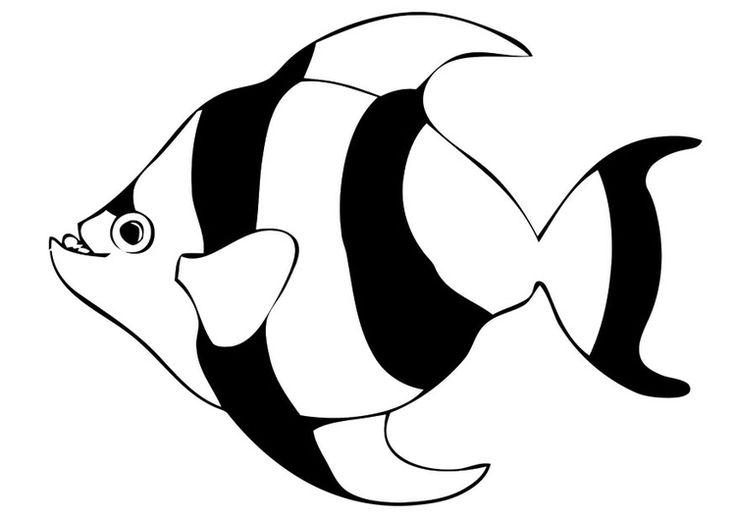 malvorlage fisch mit bildern  malvorlage fisch