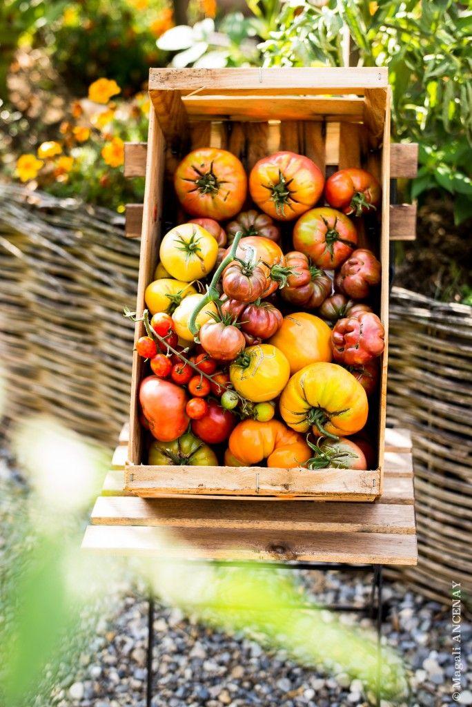 Tomates anciennes, les reines de mon potager - Quatre Saisons Au JardinQuatre Saisons Au Jardin