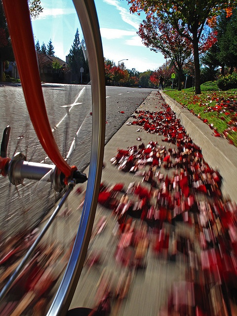 This is me! I go in bicycle in fall with my friends
