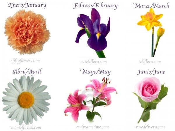Flores de nacimiento birth flowers my blog pinterest for Nombres d plantas ornamentales