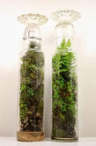 Resultado de imagem para terrarium