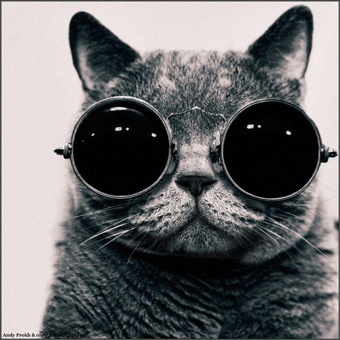 the #cat