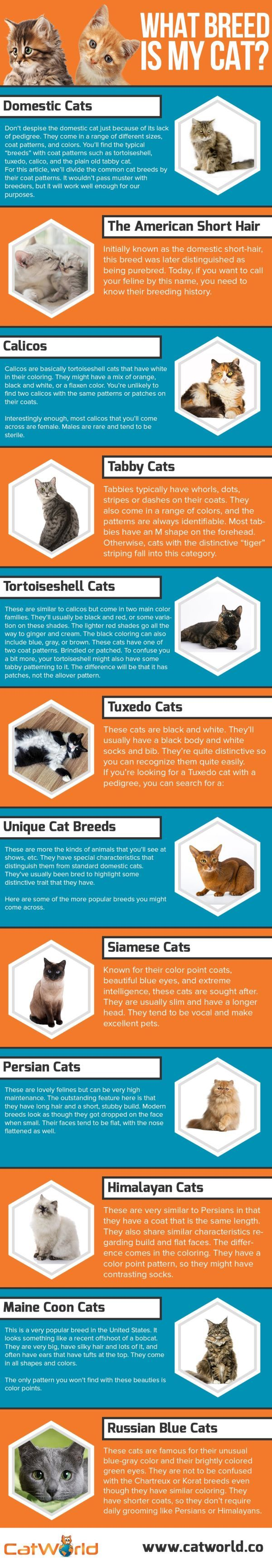 List Of Popular Cat Breeds What Breed Is Your Cat Popular Cat Breeds Common Cat Breeds Cat Breeds