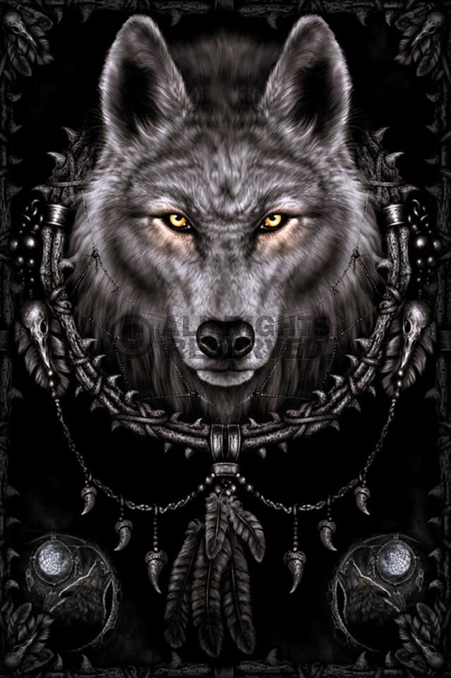 INDIAN WOLF