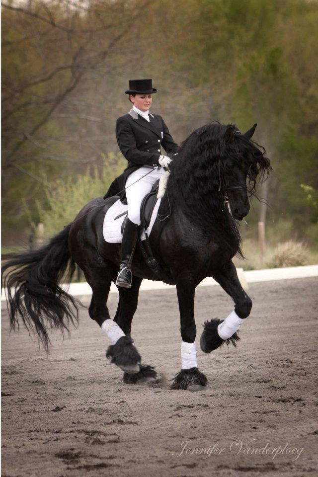 Retired from horses pretty much.  But....for one of these, I would get back in the saddle for sure!