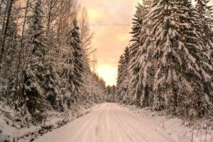 Walk in the snow by Floreina-Photography #winter #road #path #snow #cold #light #trees #forest #walk #finland #scandinavia #lovely #beautiful