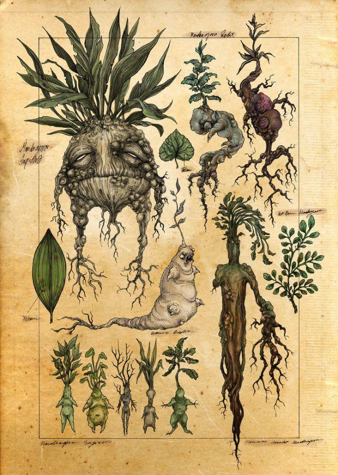 было картинки с древними животными и растениями облике