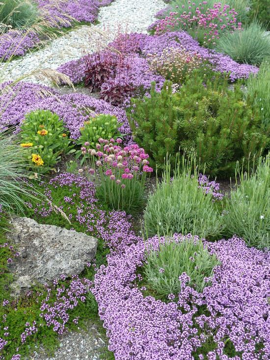 Great Groundcovers! | The Garden Glove  #Groundcovers are great for covering larger areas of soil quickly, and with #lowmaintenance. They control soil erosion, suppress weeds, act as a natural mulch under shrubs and trees, and make a pretty carpet of planting to boot!