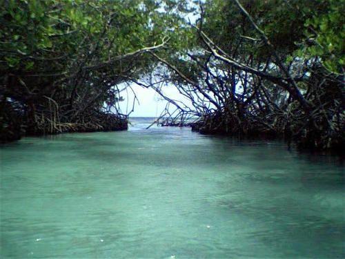 Caracoles, a mangrove island off La Parguera