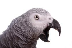 Here are five top tips to help you teach your bird to speak from The Parrot University.