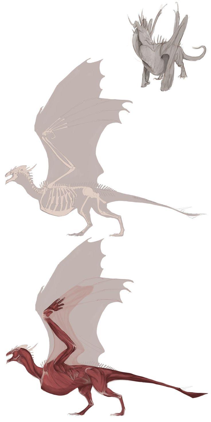 #DRAGON #AnimalAnatomy  Wyvern Anatomy WIP by *Pythosblaze on deviantART