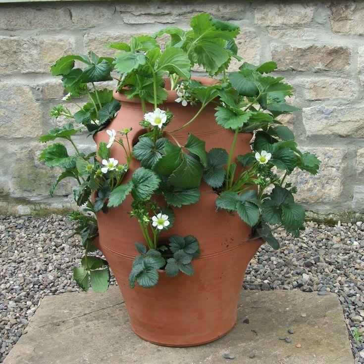 Large Strawberry Pot - The Potting Shed