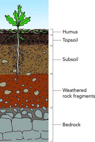 Layers of Soil - Explained with supporting questions and activities