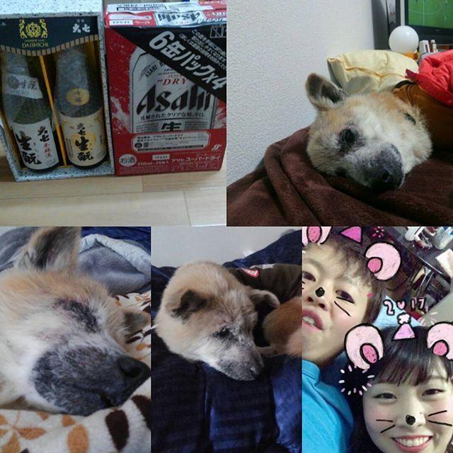 明けましておめでとうございます。 今年も皆様よろしくお願いいたします! ってわけで年越しましたね 昨日は盛大に年越し、写真とりわすれたけど。笑 後輩にアサヒ1ケースもらいました。笑 会社からは日本酒(*´∀`) 酒に困らない1年になりそうです(*´∀`) モカくんも新年から絶好調で散歩ノリノリ(*´∀`) そして彼女と半年突破(*´∀`) 今年はいろんなことへ挑戦の1年にしたいと思います( ̄ー ̄) #あけおめ#愛犬#モカくん#秘密結社老犬倶楽部 #来年は戌年つまり俺らの年ですね#4月でモカは15才#誕生日実は1日違い#今年も犬とかえでぶの餌付けがんばろ。笑