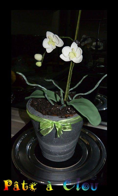 orchid potted plant   moth orchid pot cake / gâteau en forme de pot d'orchidée papillon