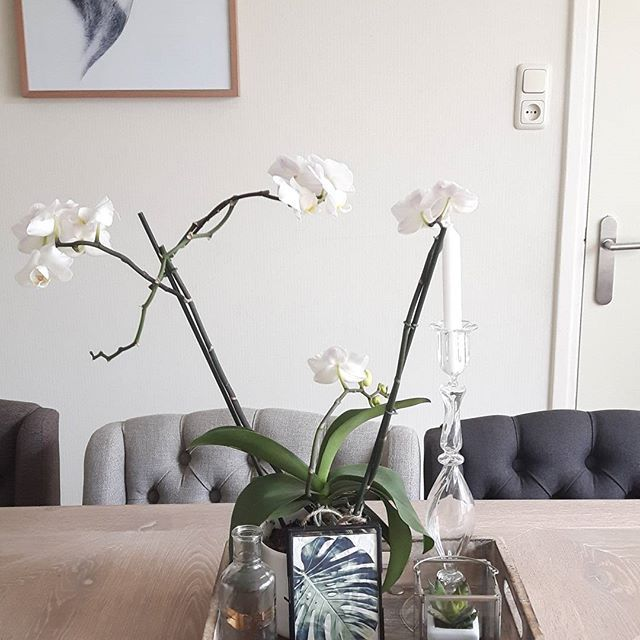 2 de bloei / orchidee 👌. #instaflowers #nature #naturalcolor #interiorforyou #myhome2inspire #interior #designjungle#showhometop5#rivieramaison#morethancanvas