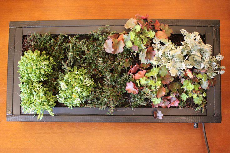 Cuadro natural para exterior #jardinvertical #cuadrosvivos #personalizado #leavesdesign