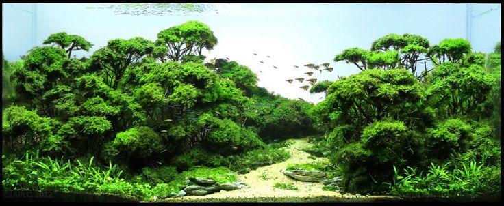 ikan hias, toko ikan hias, aquascape, tanaman air tawar, step by step aquascape, DIY, peralatan aquarium, aquarium