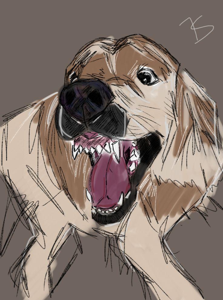 My dog Bilbo #sketch #drawing #dog