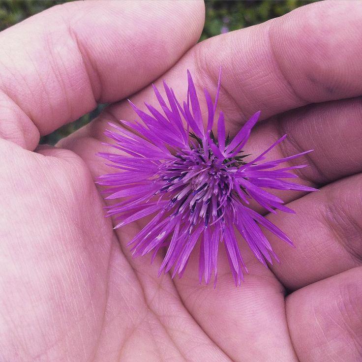 #simplethings #nature #inspirações #inspiration #freespirit #purple