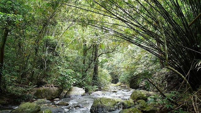 Kalimantan Rainforest..sooo lovely