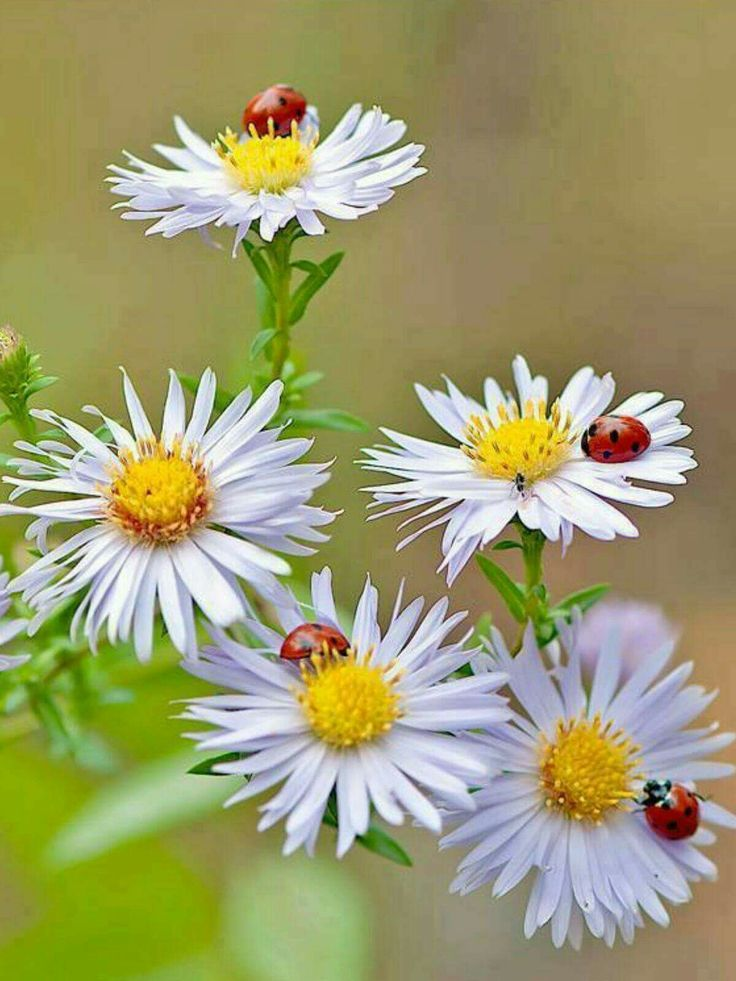 Картинки с цветами с добрым утром веселые, сделать открытку
