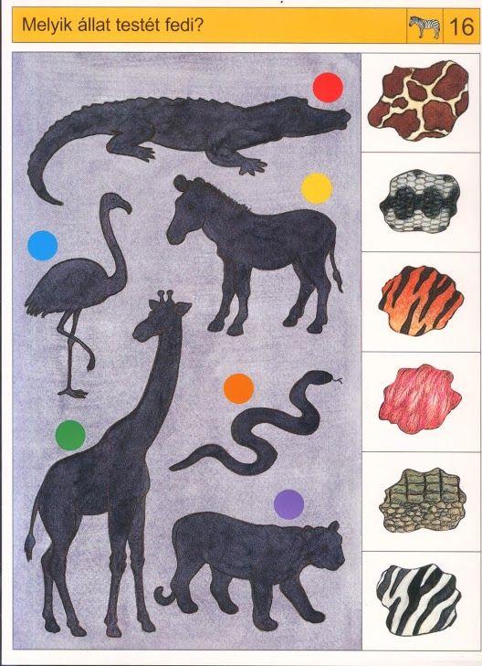 Welke huid hoort bij welk dier? Free printable