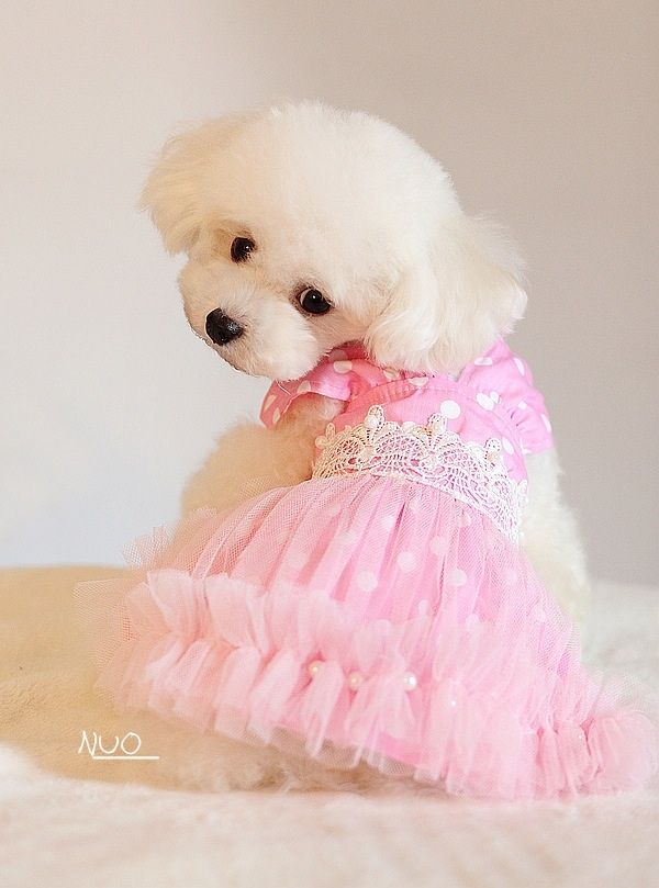CiCi Pearl Cotton Pink TuTu Dress. Enjoy 20% OFF of our NEW IN products <3