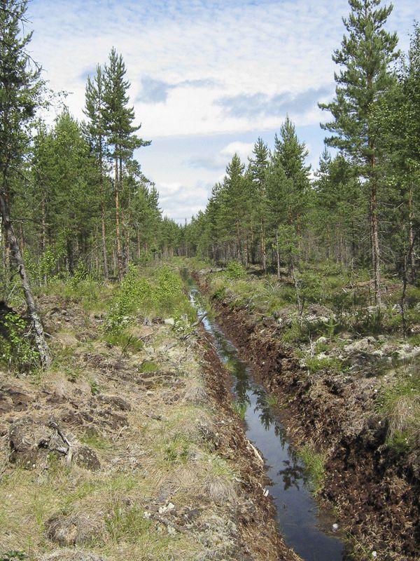 Metsäojitus kuivattaa rämettä. Ojituksen ideana on parantaa metsän kasvua, mutta suurin osa ojituksista ei ole toiminut kasvun parantamisessa.